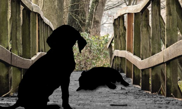 Mayat Anjing di Jembatan