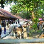 Menengok Kearifan Lokal di Kabupaten Sleman